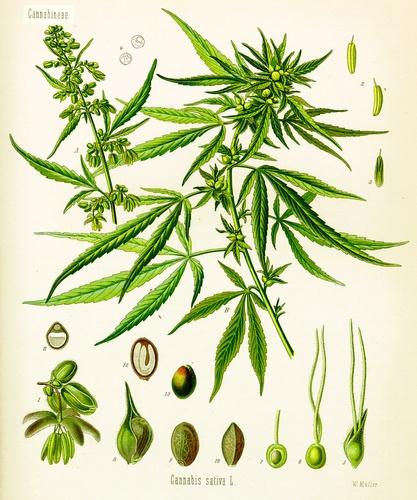 Avons-nous encore les moyens de prohiber la drogue ?