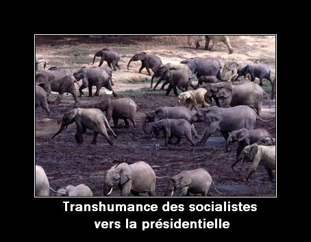 Transhumance des socialistes vers la présidentielle