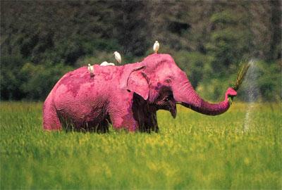 Des primaires éléphantesques