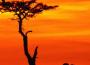 L'Afrique, victime de la mondialisation?