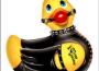 Le canard coquin et la Constitution