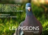 Les Pigeons sont les canaris de l'économie