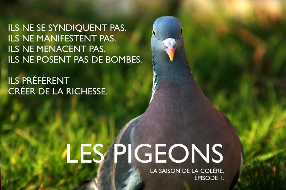 les pigeons sont les canaris de l conomie contrepoints. Black Bedroom Furniture Sets. Home Design Ideas