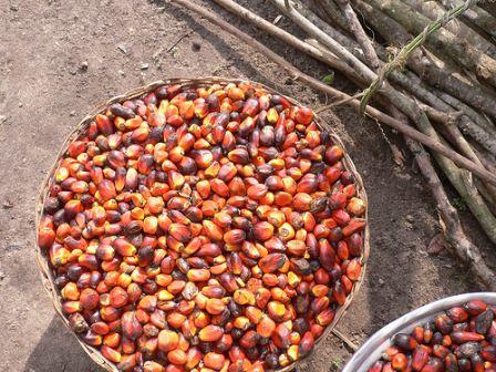 Nutella, huile de palme : besoin de nouvelles recettes