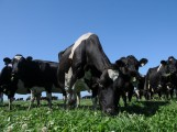 Le numérique bouscule l'agriculture