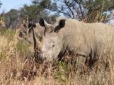 Protection de l'environnement : quel potentiel pour l'approche propriétariste en Afrique ?