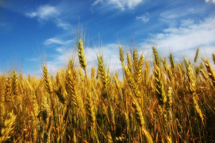 Construire la résilience pour la sécurité alimentaire