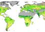 Les déserts verdissent grâce à la hausse du CO2