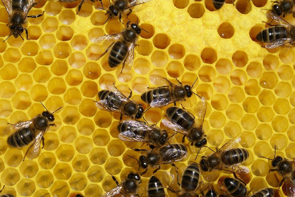 Ce que les narques devraient apprendre des abeilles - La ruche a miel ...