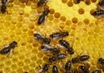 Ruche abeilles (Crédits Printemps Eté, licence Creative Commons)