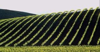 Agroalimentaire : attention, emplois en danger !