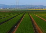 Accaparement des terres agricoles : un problème ?