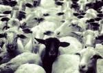 L'individualisme est-il une maladie honteuse ?