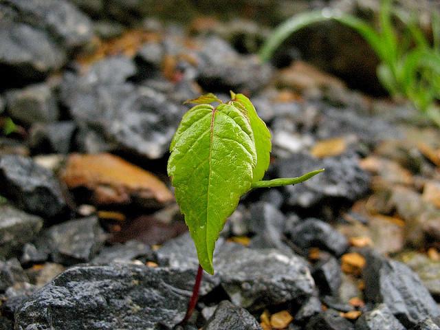 Croissance entrepreneurs écologie (Crédits davetoaster, licence Creative Commons)