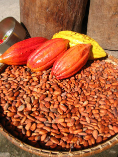 Fèves de Cacao (Crédits Lolay, licence creative Commons)