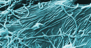 Ebola, virus et cybervirus
