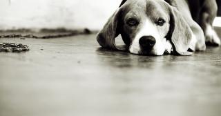 Je suis pour nommer le chien de Fabius au Quaid'Orsay