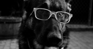 Antispécisme : doit-on prendre les droits des animaux au sérieux ? [Replay]