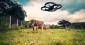 Bientôt des drones au secours des agriculteurs !