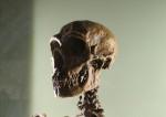 Le dernier des Neandertals