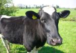 Comment sauver l'agriculture française ?