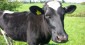 Les produits laitiers, toujours bons pour la santé !