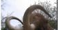 Sécurité sociale : faut-il dégraisser le mammouth ?