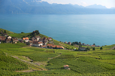 Lac Léman Suisse Credit  Dmitry Shakin (Creative Commons)