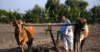 L'intérêt grandissant pour les surfaces agricoles disponibles