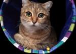 """Les animaux, """"êtres vivants doués de sensibilité"""" : la réforme inachevée"""