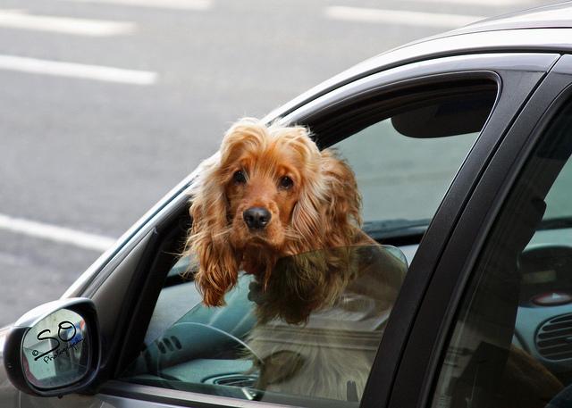 chien dans une voiture credits scottnj (licence creative commons)