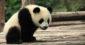 Biodiversité : quand WWF prouve que le capitalisme est le meilleur système [Replay]