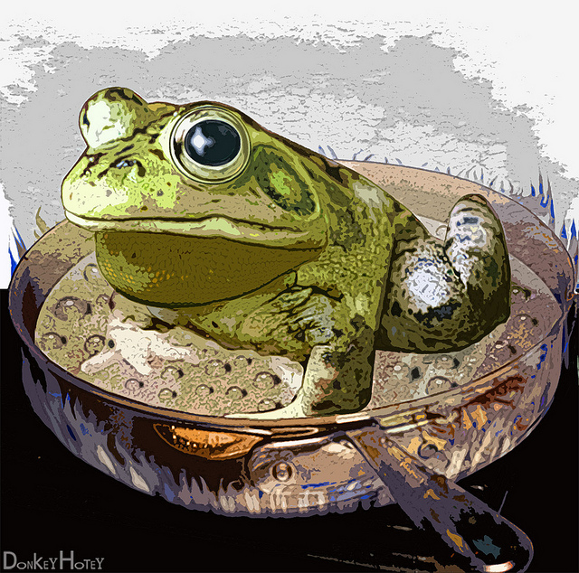 grenouille qu'on fait bouillir credits Donkeyhotey (licence creative commons)
