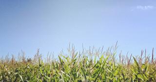 OGM : vers une Union Européenne plus souple ?