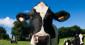 [Replay] Agriculteurs français : comment en est-on arrivé là ?
