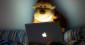 Expertise journalistique et paradoxe du singe savant