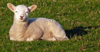 Regards croisés juif et chrétien sur les fêtes de Pâque(s)