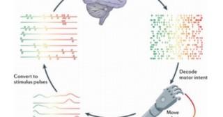 Programme Darpa: bienvenue dans un nouveau paradigme transhumaniste