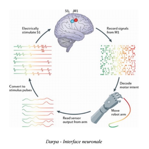 Interface neuronale (Crédits Darpa, image libre de droits)