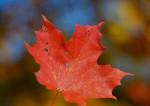 Canada : quand un fleuron de l'économie nationale devient étranger
