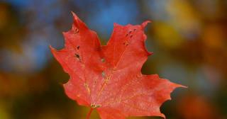 Le Canada peut-il vraiment s'endetter encore davantage ?