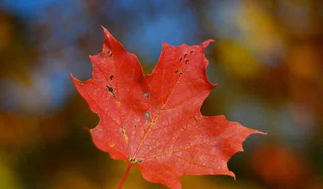 Canada : le printemps érable cinq ans plus tard