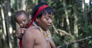 Résistance aux bactéries pathogènes : le cas des Indiens Yanomami