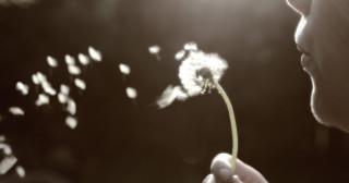 Le vent s'essouffle dans l'emploi éolien
