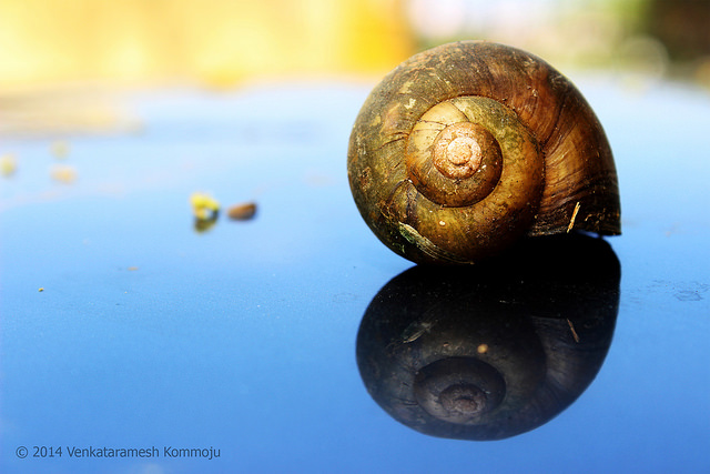 Snail Shell .. Explored on 4/14 credits  Venkataramesh Kommoju via Flickr ((CC BY-NC-ND 2.0)