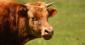 Industriels de la viande : élevés aux aides publiques