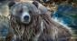 À l'ombre de l'ours russe, la Géorgie