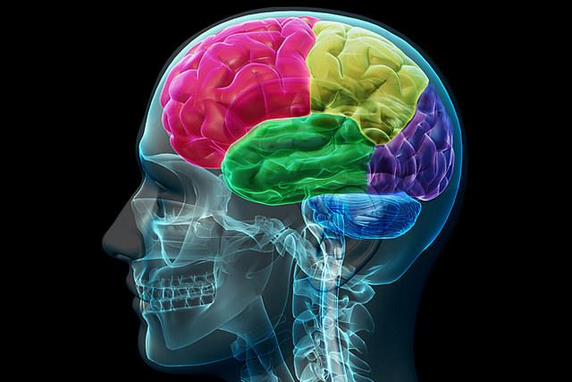 Lobes du cerveau (Crédits : Allan Ajifo, licence CC-BY 2.0), via http://aboutmodafinil.com/ Flickr