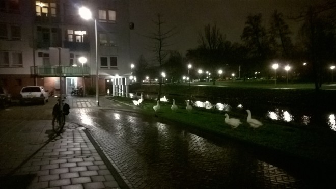 Amsterdam ouest-Tous droits réservés