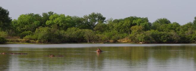 Des hippopotames au parc de la Pendjari-Tous droits réservés.